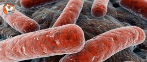 Axit lactic là năng lượng hay kẻ thù của cơ bắp gymer