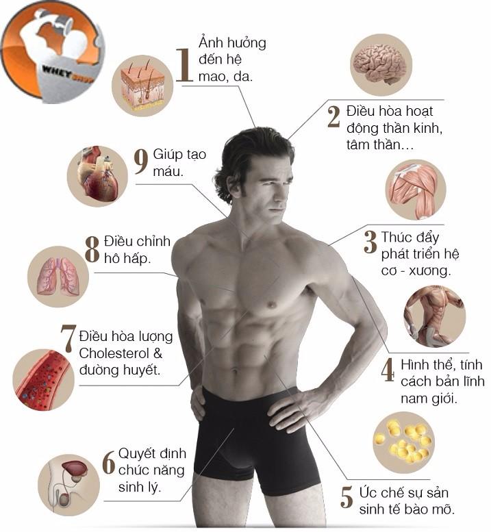 Chức năng của testosterone là gì