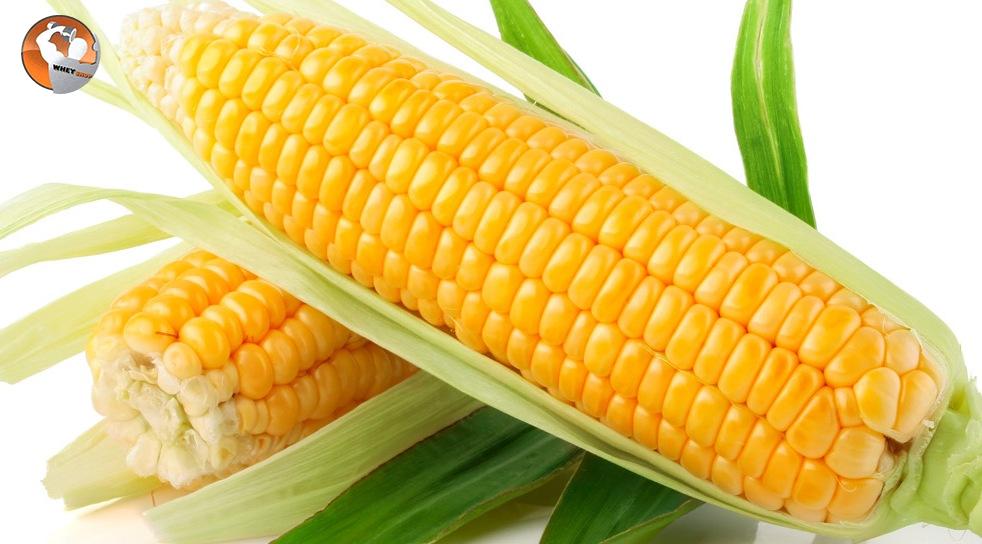 Thực phẩm biến đổi Gen