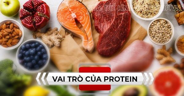 Vai trò của protein đối với cơ thể người và trong dinh dưỡng như thế nào, chúng ta cùng Wheyshop tìm hiểu về vai trò protein qua bài viết sau đây...