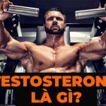 Testosterone thường được nhắc tới nhiều trong việc phát triển cơ bắp và sức khỏe của nam giới. Vậy testosterone là gì ? Cùng tìm hiểu chi tiết về testosterone..