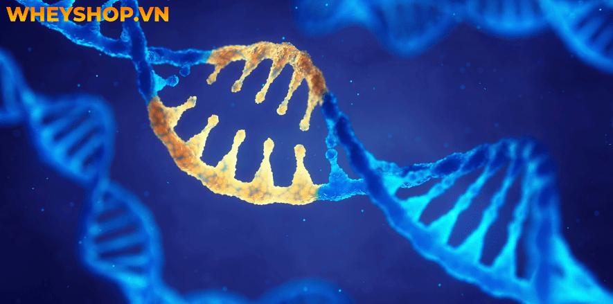 Thực phẩm biến đổi Gen có tốt cho sức khỏe không? Có nên sử dụng thực phẩm biến đổi gen? Hãy cùng WheyShop tìm hiểu chi tiết qua bài viết...