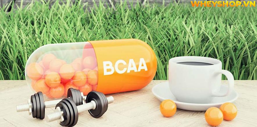 BCAA là một trong những sản phẩm quen thuộc của người tập gym, thể hình. Hãy cùng chúng tôi tìm hiểu 3 lý do để khẳng định BCAA đốt mỡ...
