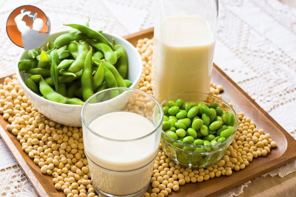 thực phẩm bổ sung protein