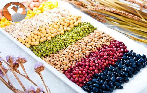 Bột đậu - loại bột dinh dưỡng cho người tập thể hình
