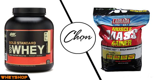 Sữa tăng cân Mass gainer hay Whey protein