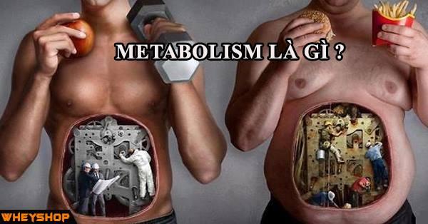 Metabolism là gì