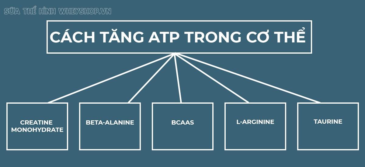 Nguồn năng lượng để cơ bắp của bạn hoạt động chính là ATP, vậy ATP là gì, người tập thể hình cần lưu ý gì để duy trì ATP khi tập gym?...