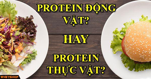 protein dong vat hay thuc vat tot hon wheyshop vn