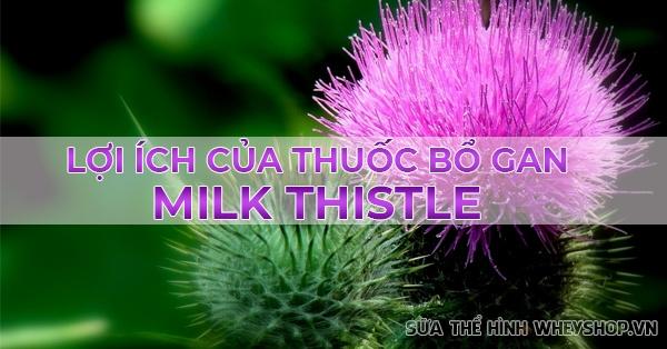 nhung dieu ban can biet khi mua thuoc bo gan Milk Thistle 600x314