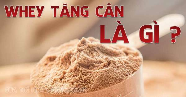 whey tang can la gi whey protein co tot khong 600x314