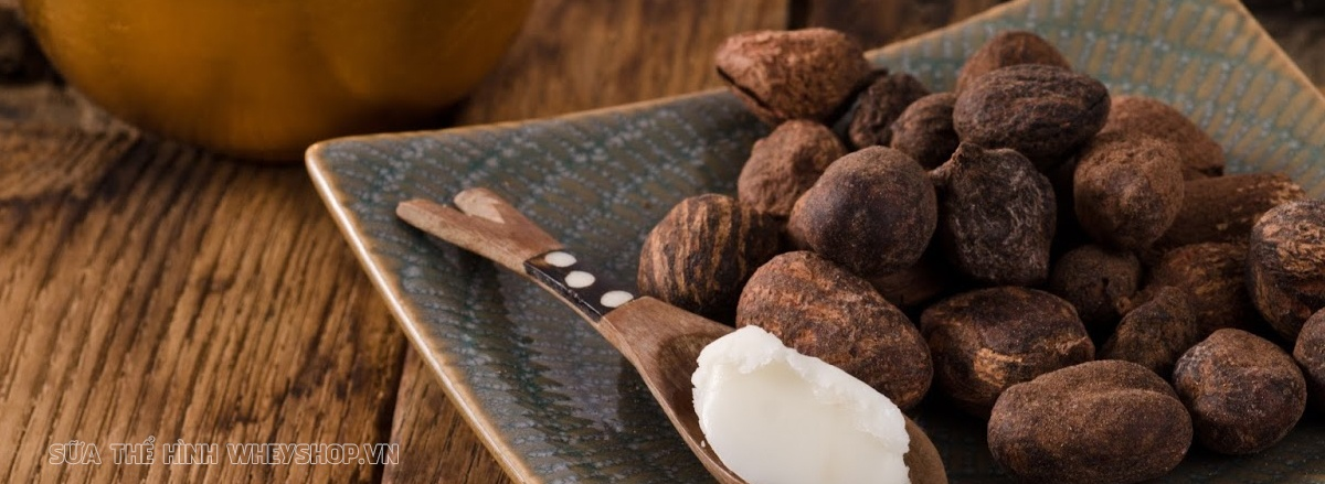 Chất béo đóng vai trò rất quan trọng duy trì cơ thể khỏe mạnh, phát triển toàn diện. Cùng WheyShop tìm hiểu top 30 thực phẩm giàu chất béo qua bài viết...