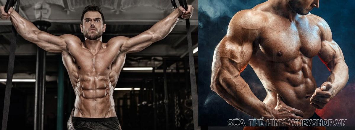 Bodybuilding là gì ? Cùng WheyShop tìm hiểu chi tiết về Bodybuilding và những lợi ich mà Bodybuilding mang tới cho sức khỏe nhé...