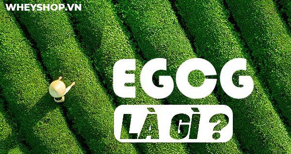 EGCG là gì? Hãy cùng WheyShop tìm hiểu chi tiết về công dụng lợi ích và những lưu ý bổ sung EGCG qua bài viết...