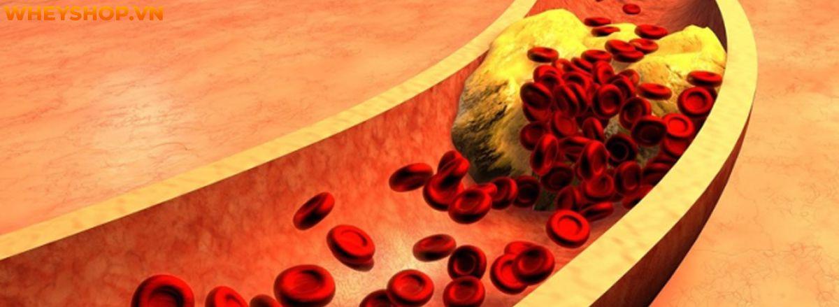 Nếu bạn đang băn khoăn về chỉ số mỡ máu Triglyceride bao nhiêu là nguy hiểm thì hãy cùng WheyShop điểm qua bài viết ngay sau đây...
