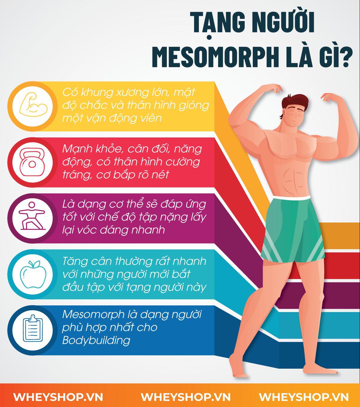 Nếu bạn chưa biết mình có phải tạng người Mesomorph để tập thể hình không thì hãy cùng WheyShop tìm hiểu thông qua bài viết sau nhé...