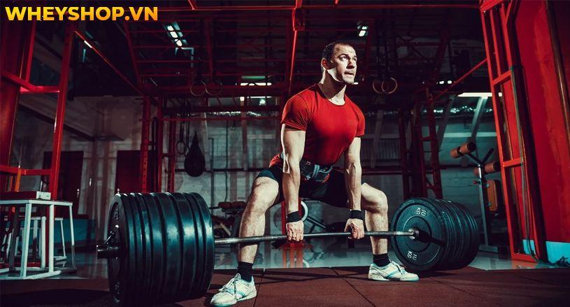 Bạn đang tìm hiểu về các nhóm cơ để tập gym một cách hiệu quả nhất và thắc mắc không biết Hamstring là gì hoặc cách tập cho nhóm cơ Hamstring này như thế nào...