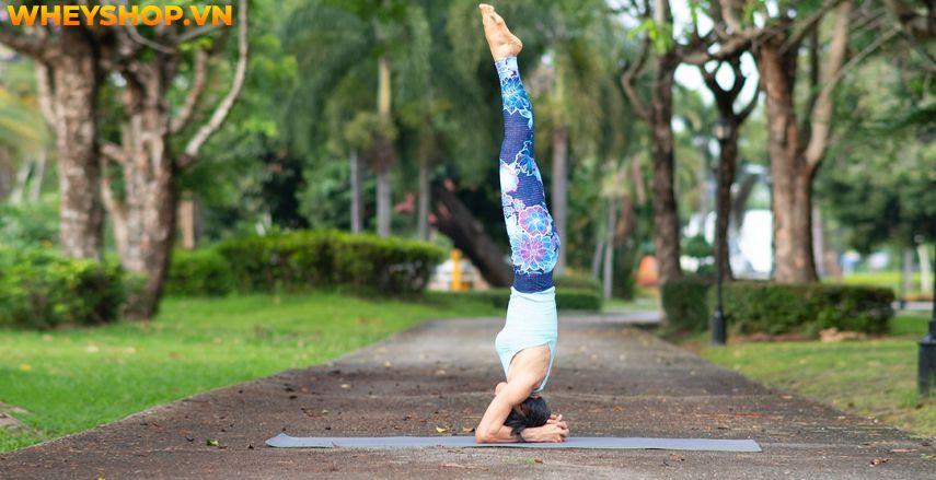 Tìm hiểu lợi ích và hướng dẫn tập trồng chuối Yoga