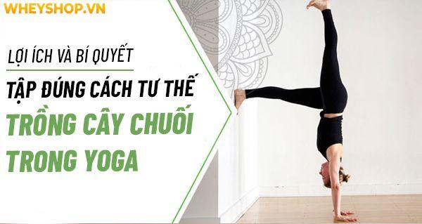 Tư thế Yoga trồng cây chuối hay còn gọi là tư thế lộn ngược, là một trong những tư thế được yêu thích nhất mọi thời đại trong Yoga. Việc lộn ngược này mang...