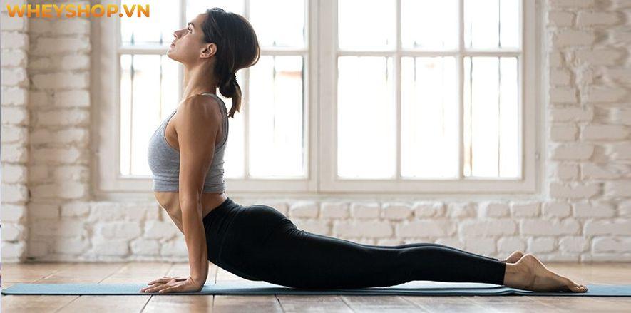 Nếu bạn đang quan tâm về bộ môn Yoga mà vẫn chưa hiểu rõ về lợi ích của Yoga thì bài viết này, WheyShop sẽ cùng các bạn tìm hiểu chi tiết về lợi ích của Yoga...