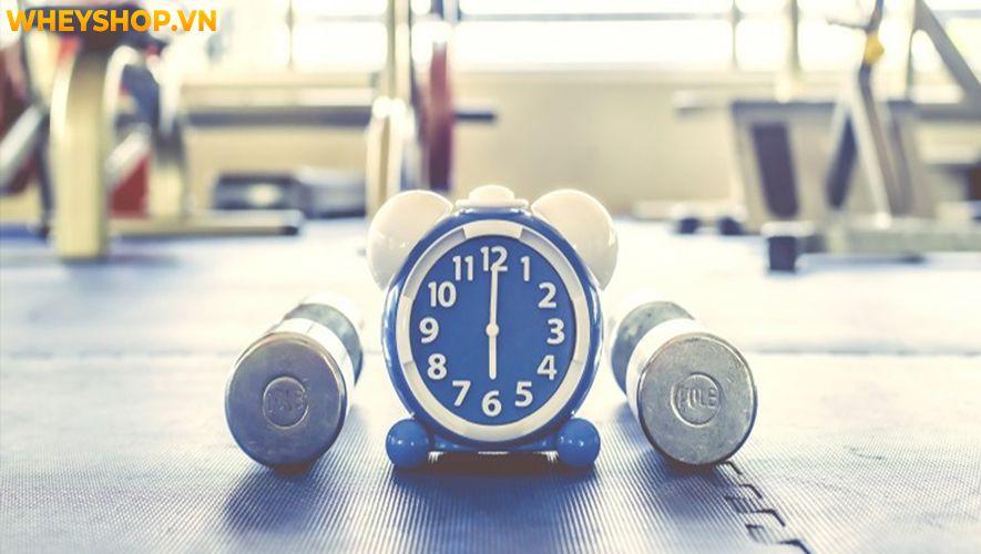 Lợi ích của việc tập thể dục có thể cải thiện gần như mọi khía cạnh sức khoẻ từ trong ra ngoài. Bài viết dưới đây WheyShop sẽ giúp bạn tìm hiểu rõ hơn lợi...