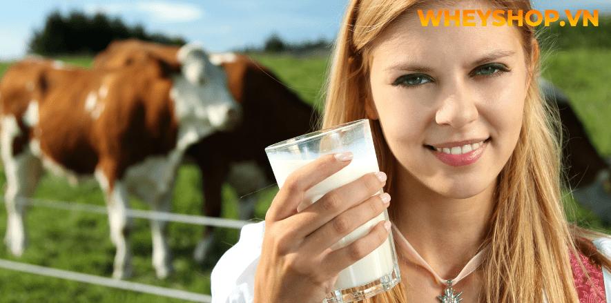 Sữa bò là thức uống được nhiều người biết đến. Tuy sữa bò cũng rất giàu giá trị dinh dưỡng nhưng không nên bỏ qua những tác hại của sữa bò. Nó gây ảnh hưởng...