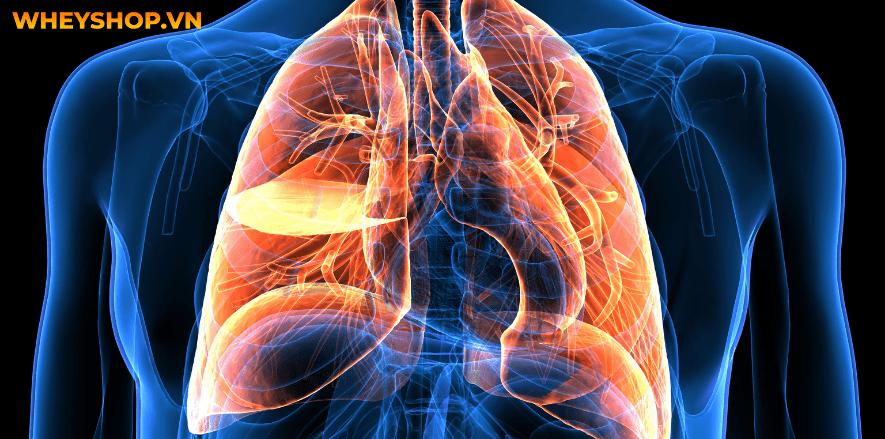 Nếu bạn đang tìm hiểu về cấu tạo cơ thể người thì bài viết sau đây, WheyShop sẽ giải đáp chi tiết mọi thắc mắc về cấu tạo cơ thể người ...