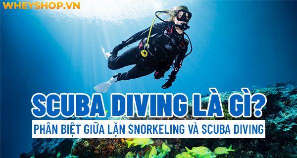 scuba diving la gi 10