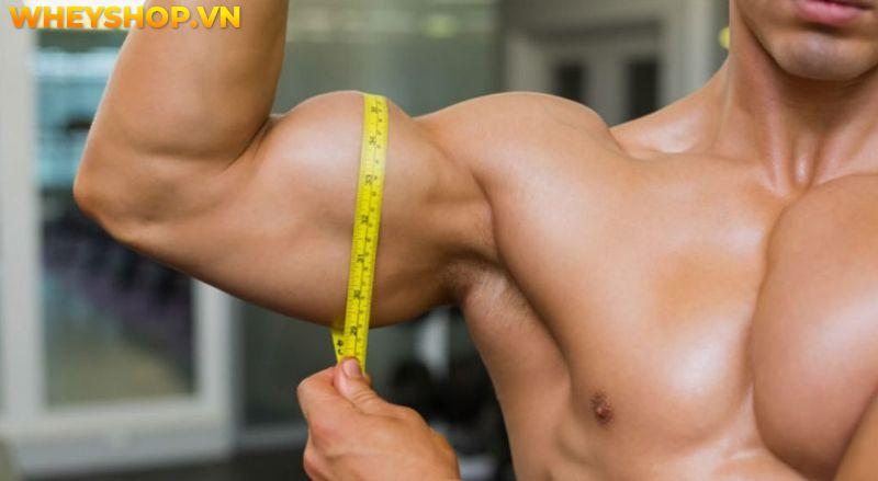 Nếu bạn đang băn khoăn tìm hiểu thể hình cho người gầy tăng cân thì hãy cùng WheyShop tham khảo chi tiết bài viết...