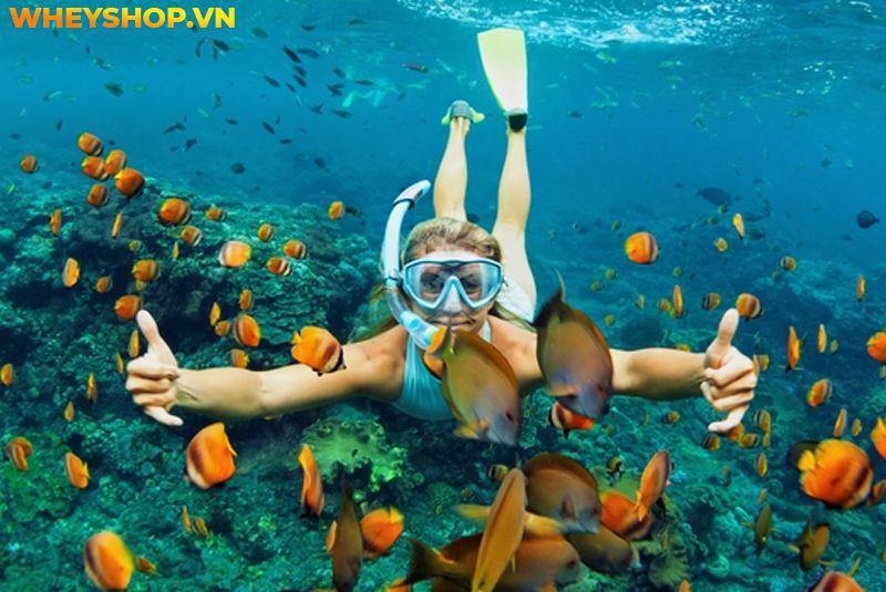 Snorkel là gì ? Bằng cách này, bạn có thể nhìn thấy san hô và sinh vật biển mà không sợ cá di chuyển và không phải nhịn thở một cách khó khăn, điều bạn cần...
