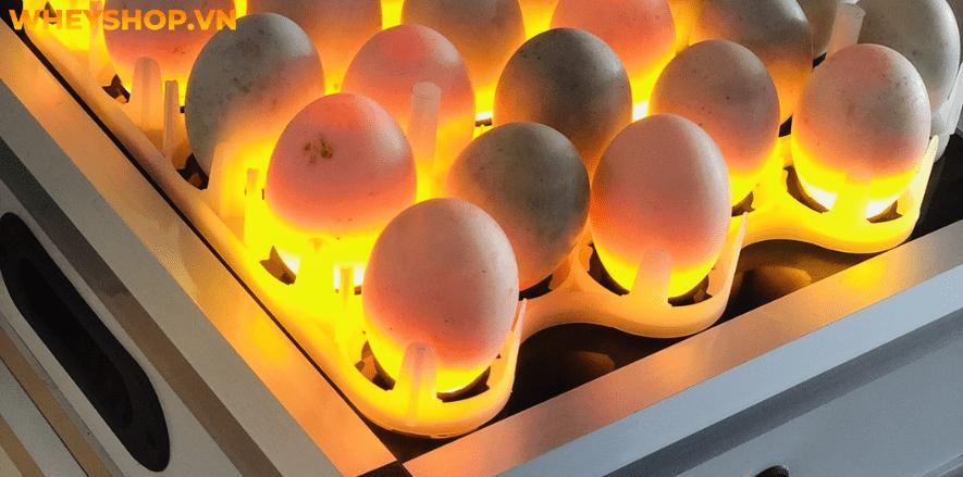 Trứng gà công nghiệp là loại trứng bán rất phổ biến ở chợ, dễ ăn và rất rẻ, đó là lý do nhiều gia đình sử dụng trứng gà công nghiệp để chế biến các món ăn....