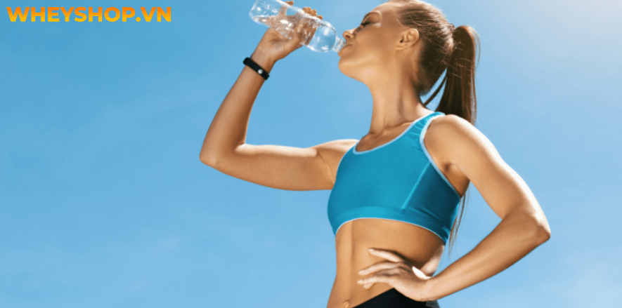 Nếu bạn chưa biết về vai trò của nước trong đời sống và sức khoẻ con người thì hãy cùng WheyShop tham khảo chi tiết bài viết ngay sau đây...