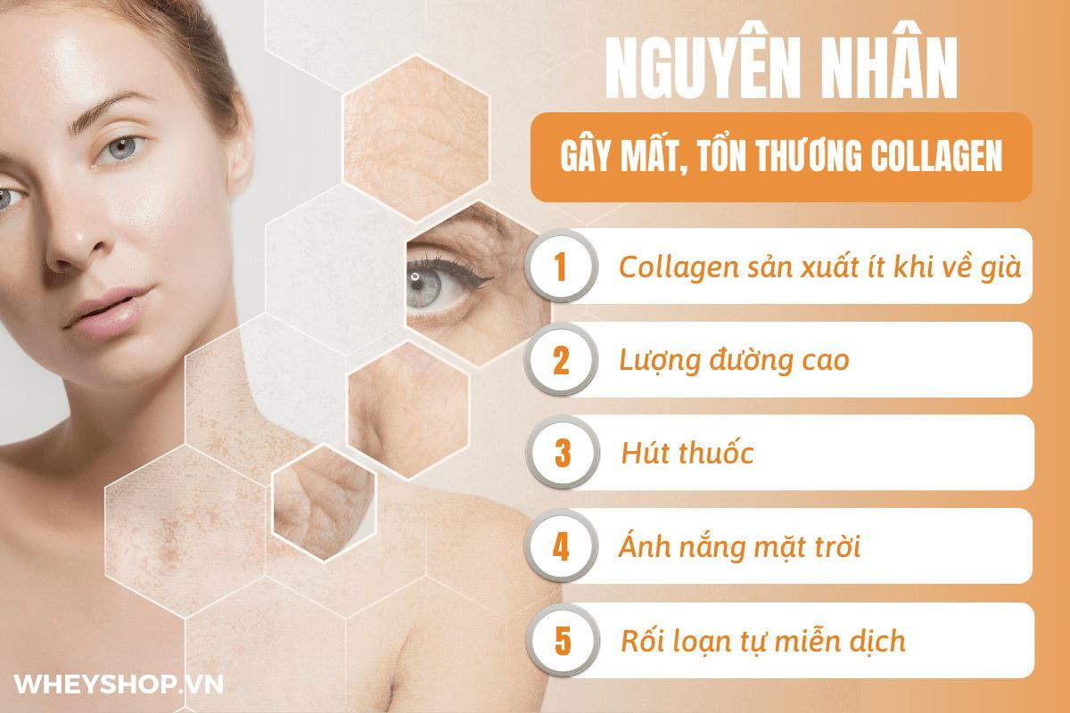 Collagen luôn được chị em phụ nữ truyền tai nhau về công dụng của việc giữ gìn sắc đẹp và chăm sóc sức khỏe đặc biệt. Biết được collagen có tác dụng gì sẽ...