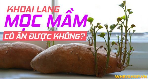 khoai lang moc mam co an duoc khong 9