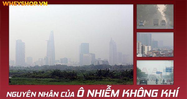 Nếu bạn đang tìm hiểu nguyên nhân của ô nhiễm không khí và cách khắc phục thì hãy cùng WheyShop tham khảo bài viết...