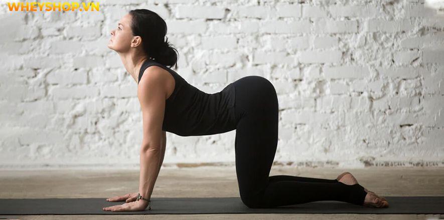 Vinyasa Yoga một trường phái yoga đơn giản giúp kết nối cơ thể và tâm trí của người tập. Tại sao loại hình Yoga này lại phổ biến như vậy? Bài viết dưới đây...