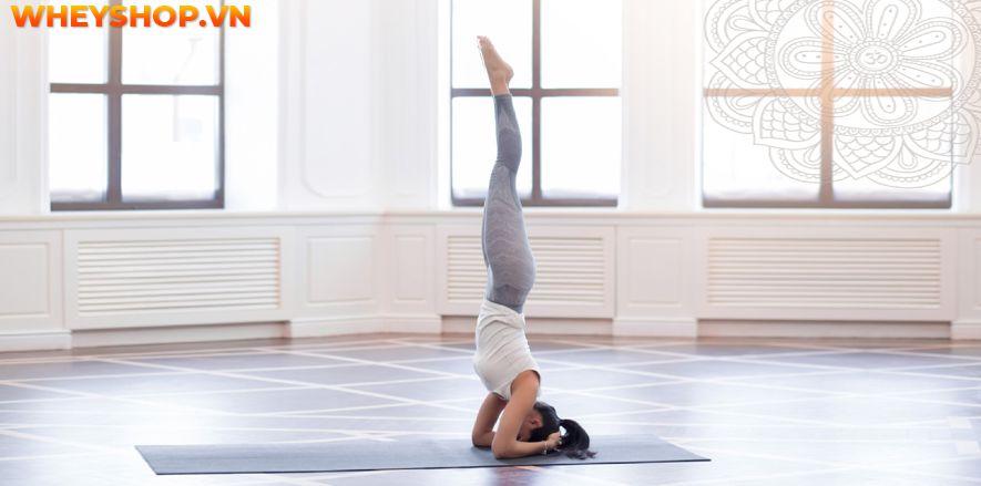 Nếu bạn đang tìm kiếm những tư thế Yoga đẹp mắt thì hãy cùng WheyShop tham khảo ngay top 10 tư thế Yoga đẹp nhất hiện nay tại bài viết...